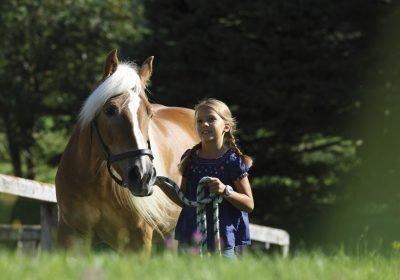 Vor allem Mädchen lieben die flachsfarbenen Haflingerpferde. Reiterhöfe gibt es in ganz Südtirol, etwa in Hafling oder auf der Seiser Alm.