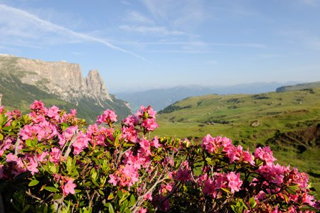 Impressions from the Hotel Gstatsch on the Alpe di Siusi and environs